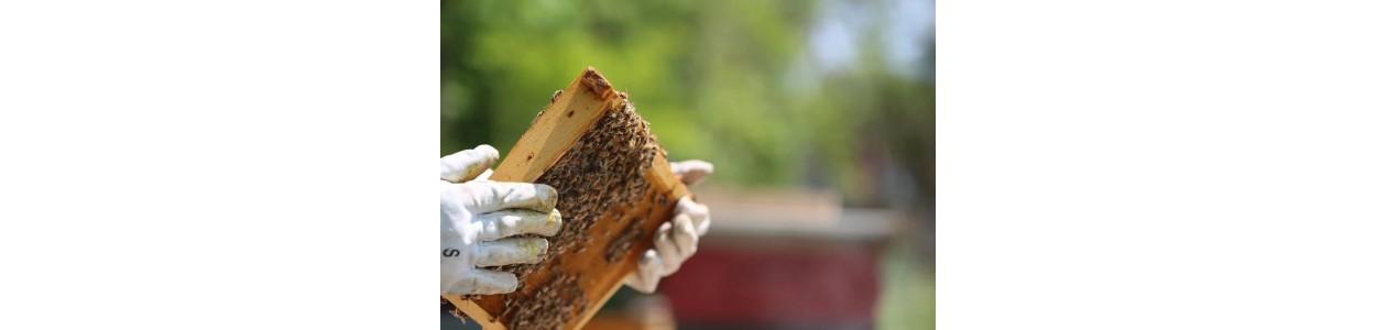 Manusi apicole
