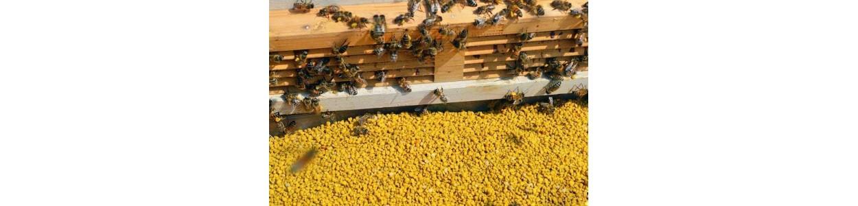 Colectare polen